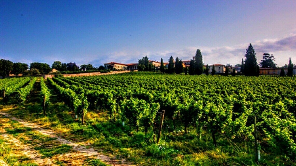 LUXURY WINE COUNTRY TOURS FRANCIACORTA - BLUERENTAL AUTONOLEGGIO